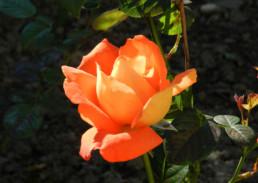particulier - geniet tuin